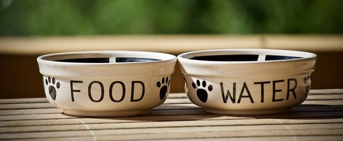 How to Choose a Dog Bowl